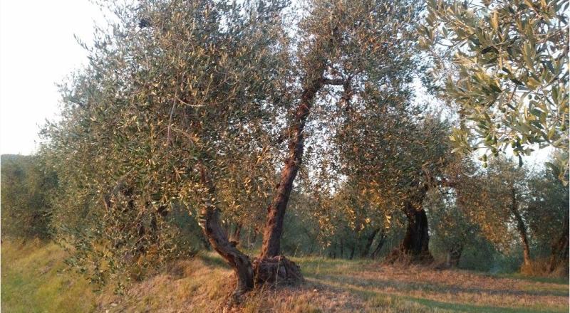 フィレンツェのアグリツーリズモ、ラヴァッキオ