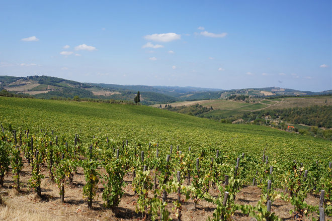 フィレンツェ発ワンデイトリップ 葡萄畑