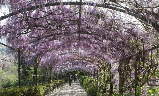 フィレンツェのバルディーニ庭園